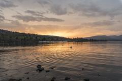 Scottish sunset (mystero233) Tags: scotland lochlamond lake lamond balloch uk britain water sunset sun dusk swan bird reflection orange outdoor landscape nature