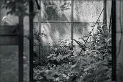 The old greenhouse (Eva Haertel) Tags: eva haertel canon5dmarkiii greenhouse gewächshaus alt old glasshouse detail monochrom bw sw blackandwhite
