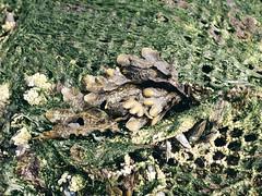 Impressionen von Utah Beach (Andreas Gugau) Tags: landschaft strand beach normandy utah meer dday invasion overlord operation neptun coastal küste sand atlantik maritim france lamadeleine normandie frankreich hostroisch history geschichte allied austern oysters seafood farm farming