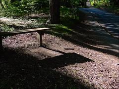 On A Slant (HBM!) (Nanny Bean) Tags: benchmonday shadows woodland
