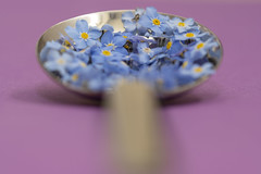 A spoonful of ... forget me nots (stopdead2012) Tags: macromondays aspoonful flowers forgetmenots spoon macro