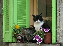 Critical Cretan Cat (Wolfgang Bazer) Tags: critical cretan cat cats kritische kretische katze mieze katzen rethymno kreta crete window fenster
