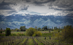 Grapevines in foreground and Dinaric Alps (often called Albanian Alps) in the Background (stevebfotos) Tags: balkans farming grapes macedonia mountains debarcamunicipality republicofmacedonia