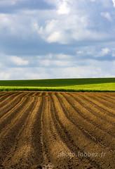 sillons (louis.labbez) Tags: campagne countryside paysage sillon champs field nord france labbez ciel brun vert culture agriculture colza landscape sky cloud