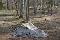 Remains Of Season Past (pni) Tags: forest park snow tree grass helsinki helsingfors finland suomi pekkanikrus skrubu pni quiet