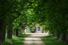 il cespuglio è in fiore (serie) (fotomie2009) Tags: mas de brunelys francia france provence provenza viale avenue trees alberi spring green door window