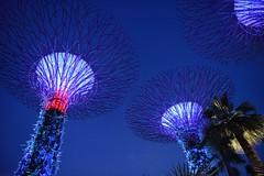 SINGAPORE (gabrielebettelli56) Tags: asia singapore night lights nikon travel viaggi