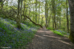 Photo of Woodland Walk near The Lake