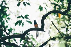 台北植物園 (aelx911) Tags: a7rii a7r2 sony glens fe70200 70200 landscape bird taiwan taipei nature 台灣 台北 台北植物園