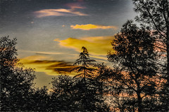 Sunset Commencement (p) (davidseibold) Tags: america california cloud jfflickr photosbydavid plant postedonello postedonflickr redding shastacounty sky sunset tree unitedstates usa