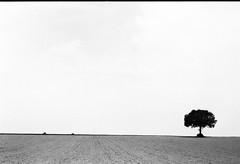 Horizon 1 (herbdolphy) Tags: analog analogique argentique pellicule 35mm film pentax pentaxmx fomapan 400 filmisnotdead filmphotography noiretblanc blackwhite