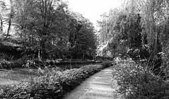 The Path Beneath The Willow. May 2019 (Simon W. Photography) Tags: blackandwhite blackwhite monochrome monotone greyscale grayscale bw bnw nocolour nocolor lightandshadow highpeakjunction cromford derbyshire highpeakrailway cromfordcanal matlock highpeakjunctionvisitorcentre highpeaktrail cromfordwharf derwentvalleymillsworldheritagesite worldheritagesite canal water spring spring2019 heritage highpeakpumphouse riverderwent highpeakjunctionworkshops wildlife thehighpeakjunctionvisitorcentre transport trees reflection derbyshirecountycouncil scheduledmonuments englishheritage nationalheritage visitderbyshire river leawoodpumphouse leawoodaqueduct aqueduct riversonyrx10iv sonyrx10m4 rx10m4 sonyuk sony sonyrx sonyrxphoto sonymoments sonyworldclub sonyusers sonypictures visitengland unitedkingdom uk england english greatbritain gb britain british eastmidlands perspective unesco