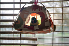 chipchip tent (Lou Musacchio) Tags: bird birdlife pets birdhouse