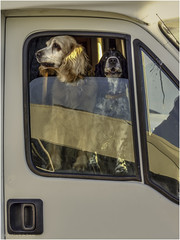 Camper dogs (Luc V. de Zeeuw) Tags: camper dogs motorhome rv canidelo north portugal