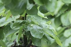 134/365: Welcome Rain