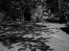 mull of galloway logan botanic garden-4131578 (E.........'s Diary) Tags: eddie ross olympus omd em5 mark ii spring 2019 botanic garden logan mull galloway
