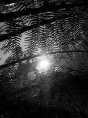 mull of galloway logan botanic garden-4131575 (E.........'s Diary) Tags: eddie ross olympus omd em5 mark ii spring 2019 botanic garden logan mull galloway