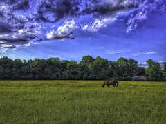 Sky and horses 2-Edit (alnbbates) Tags: may2019 skywatch brokenarrow oklahoma horses topazstudio