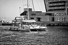 Arrivals (Fnikos) Tags: port porto puerto sea mar mare water waterfront boat ship people bird seagull building tower architecture window windows shadow shadows blackandwhite monochrome absoluteblackandwhite outside outdoor