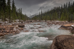 Mistaya Canyon D85_5130-HDR.jpg (Mobile Lynn) Tags: landscape tree river forest lowcloud moody snow water mountain landscapephotography outdoorphotography improvementdistrictno09 alberta canada