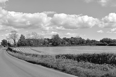 Out here in the fields (ambo333) Tags: brampton hayton cumbria england uk field fields samco samcosystem