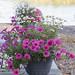 Flowers at Ravijoenlahti 155