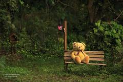 森林裡的小熊 _MG_9867_70 (阿Len) Tags: 螢火蟲 firefly 苗栗 6d ef135mmf2lusm 135l