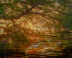 Sunset Through the Trees IMG_7868 (soniaadammurray - On & Off) Tags: digitalphotography manipulated experimental collage picmonkey photoshop abstract trees water sea shadows reflections exterior nature sunset artchalllenge quartasunset