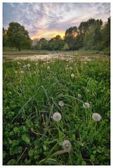 Blixembosch (FvdZ) Tags: blixembosch eindhoven noordbrabant nederland netherlands nature natuur landschap landscape sunset tokina1116mmf28