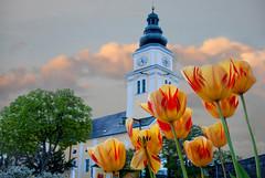 Pfarrkirche  Wenigzell (Mariandl48) Tags: pfarrkirche wenigzell tulpen dorf steiermark austria