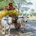 Farmer on Wagon on Road, Myanmar