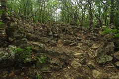 In the forest (aniko e) Tags: hiking outdoors cairn forest stones rocks tamáshegy balatonfelvidékinemzetipark balatonuplandsnationalpark balaton balatonfüred