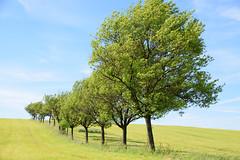 Par un jour de vent (Croc'odile67) Tags: nikon d3300 sigma contemporary 18200dcoshsmc paysage landscape arbres trees ciel sky nature campagne