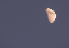 Half-Moon. (Azariel01) Tags: 2019 belgique belgium brussels bruxelles bluesky cielbleu moon lune jour daylight premierquartier firstquarter halfmoon demilune half demi cratères craters