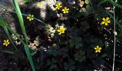 Flowers (Anna Gelashvili) Tags: flower цветочки flowers soil почва ყვავილი ყვავილები macro растение ბალახი garden yellowflower сад цветок plant bright макрос яркий ყვითელიყვავილი