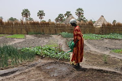 Marial Ajith community, Wau, South Sudan (FAO of the UN) Tags: emergency agriculture vegetables livestock training malnutrition inputdistribution irrigation vouchers resilience norway netherlands southsudan fao unfao faooftheun unitednations africa