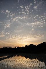 20190515A73_8128 (Gansan00) Tags: ilce7m3 α7ⅲ sony zeiss japan 山口県 yamaguchi 日本 landscape snaps ブラリ旅 中須棚田 棚田 shunan nature 5月 fe35mmf28 夕景 夕陽 sunset