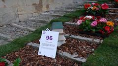 GIRONA TEMPS DE FLORS (Joan Biarnés) Tags: santfeliu girona flors 317 panasonicfz1000 gironatempsdeflors2019
