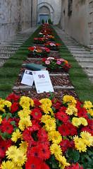 GIRONA TEMPS DE FLORS - Sant Feliu (Joan Biarnés) Tags: santfeliu girona flors 317 panasonicfz1000 gironatempsdeflors2019 santfelix