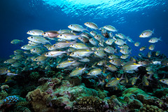 School of fish on reef