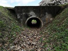 LUP&IDINPRKSD64515 (Evgenij Nikolaev) Tags: park city green nature abandoned flowers