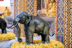 Wat Ratchabophit (aey.somsawat) Tags: architecture bangkok buddhisttemple elephant temple thaiarchitecture thailand wat watratchabophit
