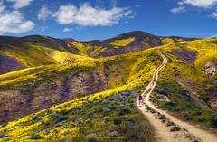 Hiking in Heaven (rajaramki) Tags: superbloom carrizoplainnationalmonument carrizoplains california superbloom2019