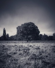 As I walked through the park, stormy cloud's come over head. This happened just as the sun was still casting it's rays on the life less grass and lush tree in the far distance. · · · · · #blackandwhite #nature #blackandwhitephotography #trees #blackandwhi (justin.photo.coe) Tags: ifttt instagram as i walked through park stormy clouds come over head this happened just sun was still casting its rays life less grass lush tree far distance · blackandwhite nature blackandwhitephotography trees blackandwhitephoto bnw treemagic blackandwhiteonly naturelovers bw treescape instagood landscape blackandwhiteperfection treelove photography treestagram bnwcaptures treeperfection monochrome treetops bnwphotography treesofinstagram bnwmood treecaptures bnwlife treelover justinphotocoe