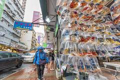 Story-telling photography (Bram de Jong) Tags: story happyplanet asiafavorites asia china hongkong streetphotography storytellingphotography goldfishmarket rain fish tripadvisor lonelyplanet ngc fisheseyes people shop