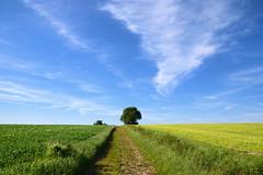 Le chemin (Croc'odile67) Tags: nikon d3300 sigma contemporary 18200dcoshsmc paysage landscape campagne champ chemin ciel cloud sky nuage arbres trees