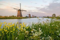 Kinderdijk Classic (martijnvdnat) Tags: holland kinderdijk molen zonsondergang avond gemaal hollands molens nederlands tourisme water werelderfgoed windmolen windmolens nieuwlekkerland zuidholland nederland
