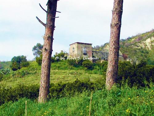 Pozzuoli (NA), 2002, Sul Lago d'Averno.