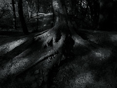 @walking path 46 (Amselchen) Tags: tree monochrome plants blackandwhite bnw mono forest woods light shadow monotone leicadglens black panasonicdcgx9 leicadgsummilux15f17