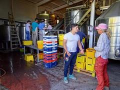 Valle de Uco Wineries - 16 (Bruno Rijsman) Tags: bruno tecla backpacking argentina valledeuco wine wineries winery mendoza